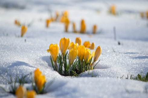 winter sring